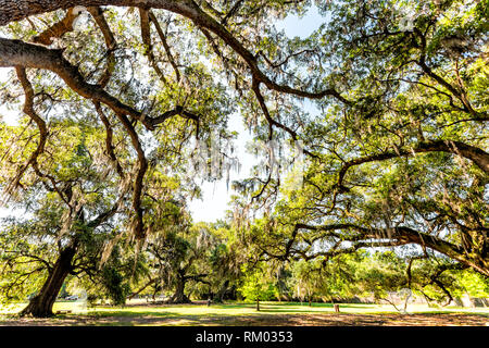 Old southern live oak trees in New Orleans Audubon park on sunny spring day with benches and hanging spanish moss and green Tree of Life in Garden Dis - Stock Photo