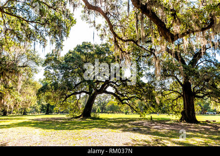 Old southern live oak trees in New Orleans Audubon park on sunny spring day with benches and hanging spanish moss in Garden District - Stock Photo