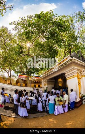Sri Maha Bodhi, the sacred bodhi tree.Anuradhapura, North Central, Sri Lanka. - Stock Photo