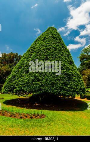 Royal Botanical Gardens, Peradeniya, Kandy, Central Province, Sri Lanka. - Stock Photo