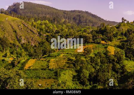 Train trip through the scenic mountains featuring many tea plantations between Nuwara Eliya (Nanu Oya) to Ella, Sri Lanka. - Stock Photo