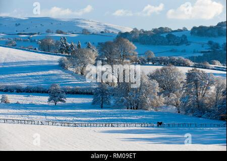 A horse stands in a wintry landscape near Builth Wells, Powys, Wales, UK. - Stock Photo