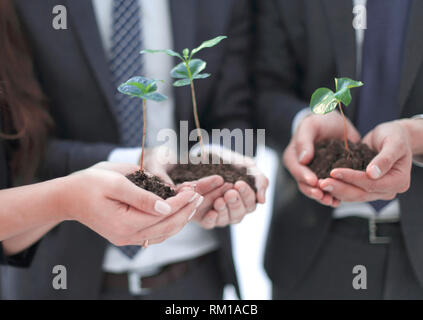 close up.young shoots in the hands of young businessmen