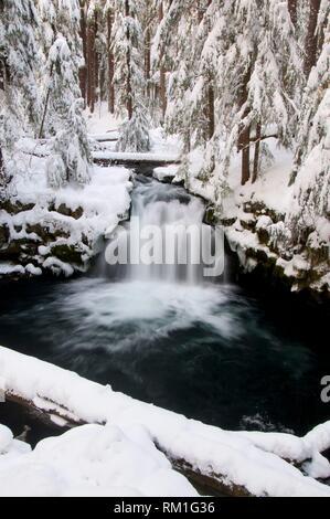 Whitehorse Falls, Rogue-Umpqua National Scenic Byway, Umpqua National Forest, Oregon. - Stock Photo