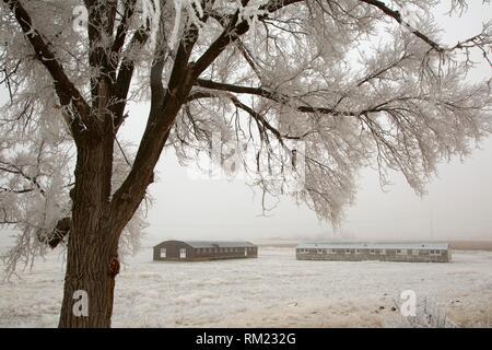 Living Barracks and Mess Hall, Minidoka National Historic Site, Idaho. - Stock Photo