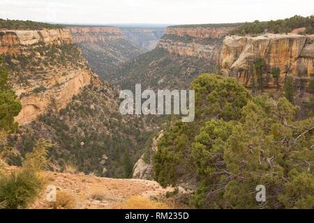Navajo Canyon, Mesa Verde National Park, Colorado. - Stock Photo