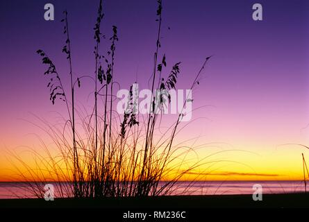 Beach oats sunset, Bowmans Beach Park, Florida. - Stock Photo