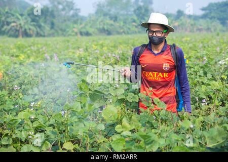 Farmer Spraying Pesticide at khulna, Bangladesh. - Stock Photo