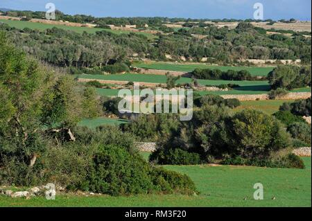 dry stone low walls in the center of the island, Menorca, Balearic Islands, Spain, Europe. - Stock Photo