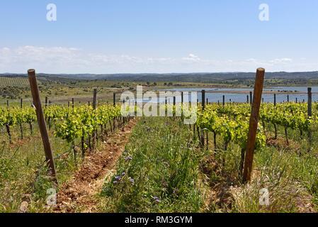 vineyards of Herdade do Esporao, Restaurant and Wine Estate, Reguengos de Monsaraz, Alentejo region, Portugal, southwertern Europe. - Stock Photo