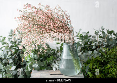 Bouquet in a glass vase of light pink genista cytisus flowers. Pastel color. Spring flowering plant branches. flower shop - Stock Photo