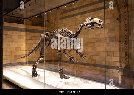 A fossil dinosaur skeleton in The Natural History Museum, London, Uk - Stock Photo