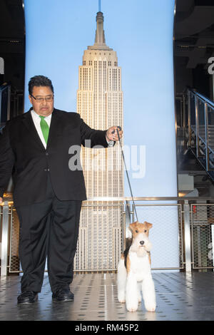 New York, New York, USA. 13th Feb, 2019. The Empire State Building hosts the Best in Show winner of the 143rd Westminster Kennel Dog Club Show, KING, the wire fox terrier on February 13, 2019 in New York. Credit: Bryan Smith/ZUMA Wire/Alamy Live News - Stock Photo
