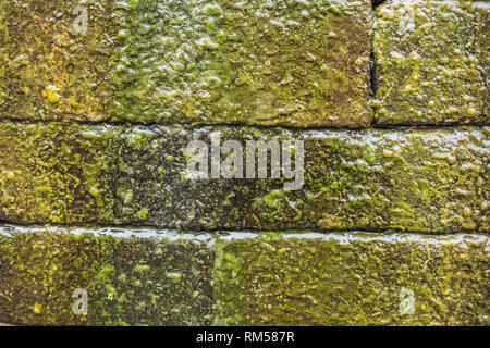 Wet brick wall with moss, Balinese style - Stock Photo