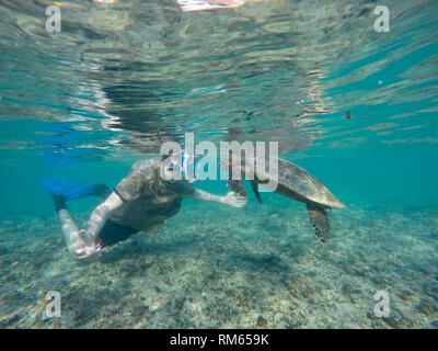 young man snorkeling and swimming with a Hawksbill sea turtle (Eretmochelys imbricata). This is the smallest of the marine turtles, rarely more than a - Stock Photo