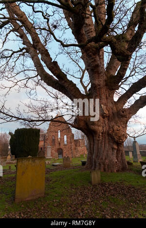 Beauly priory, Invernesshire - Stock Photo