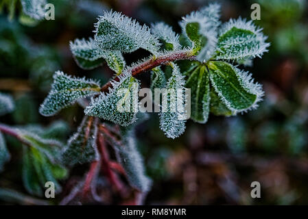 The Frozen Nature Frozen Plants Icy Morning - Stock Photo