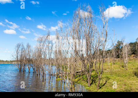Dead trees reflected in the water in Glenbawn Dam, Upper Hunter Valley, NSW, Australia. - Stock Photo