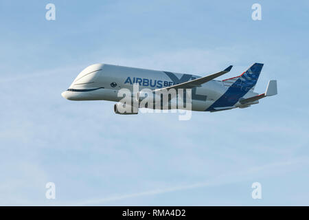 Broughton, Flintshire, UK. 14th February 2019. The new Airbus A330-743L transport plane known as the Airbus Beluga XL does a fly past at Hawarden Airport. The airport is adjacent to the Airbus factory on the outskirts of Chester and this is the first visit of the plane to the factory where it will remain until Saturday. The Beluga XL is designed to transport aircraft wings and has 30% more cargo capacity than the current Beluga. Credit: Andrew Paterson/Alamy Live News - Stock Photo