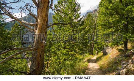 Backpacker on trial above Phelps Lake, Grand Teton National Park, Teton County, Wyoming, USA - Stock Photo