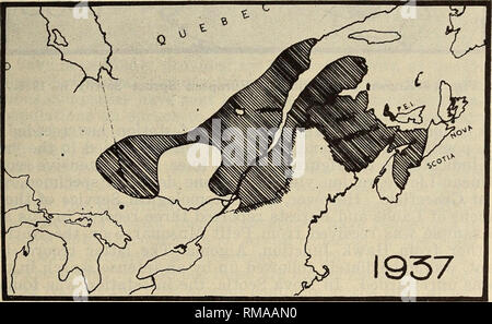 . Annual report. Entomological Society of Ontario; Insect pests; Insects. ENTOMOLOGICAL SOCIETY 23 Figure 1, taken from a plate in the report of R. E. Balch for the sawfly in 1935, summarizes the position in that year. Known distribution north of the St. Lawrence just reaches Lake St. John and the south bank of the Saguenay River, while surprising isolated records have been ob- tained on either side of Lake Temiskaming. Building upon this basis, more complete information was obtained in 1936. (Fig. 2) The known distribution has been extended 200 miles down the North Shore as far as the Penteco - Stock Photo