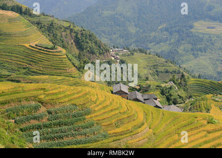 The Longsheng Rice Terraces Dragon's Backbone also known as Longji Rice Terraces. a - Stock Photo