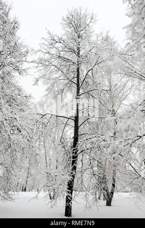 A white tree completely covered by snow in winter. - Stock Photo