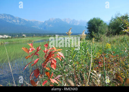 Plants along the banks of the Columbia River wetland in southeastern British Columbia indicate that autumn is on the way. - Stock Photo