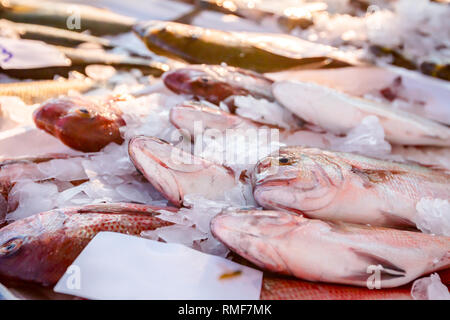 Pile of fresh Northern Red Snapper fish, Lutjanus campechanusfish, for sale on the fishmonger, outdoor seafood market. - Stock Photo