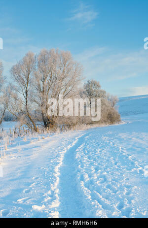 Snow covered winter landscape and frost covered hedgerow in Avebury, Wiltshire, England - Stock Photo