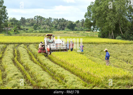 Operator maneuvering Kubota DC-60 rice harvester, Can Tho Province, Mekong Delta,  Vietnam, Indochina. - Stock Photo
