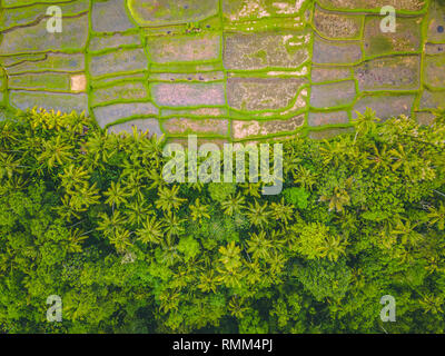 Aerial Image of Rice Terraces in Ubud, Bali, Indonesia - Stock Photo