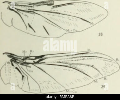 . Annals. Entomology. . Please note that these images are extracted from scanned page images that may have been digitally enhanced for readability - coloration and appearance of these illustrations may not perfectly resemble the original work.. Entomological Society of America. Baltimore [etc. ] - Stock Photo