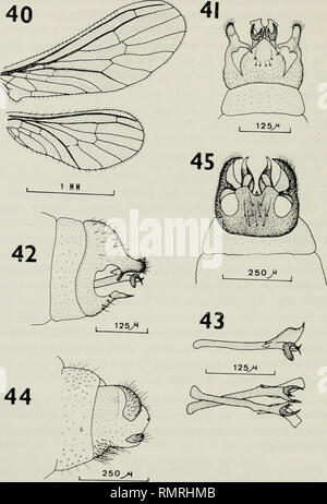 . Annali del Museo civico di storia naturale Giacomo Doria. Natural history. 30 V.J. .MOXSERRAT. Semidalis f^aìantei n. sp.: 40. Alas; 41. Porción terminal del abdomen ^, vista ventral; 42. Idem, vista lateral; 43. Parameros y uncinos, istas lateral y entral; 44. Porción terminal del abdomen V, vista lateral. Semidulis decipiens (Roepkej: 45. Porción terminal del abdomen J, ista entral. desarrollo y torma de los procesos distalcs del ectoprocto etc., y para la hcmbra podri'a citarse la carencia dc placa siibanal csclcrotizada.. Please note that these images are extracted from scanned page  - Stock Photo