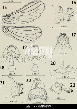 . Annali del Museo civico di storia naturale Giacomo Doria. Natural history. CONIOPTERYGIDAE 19. Heteroconis pepa n. sp.: 15. Alas; 16. Extreme abdominal cJ, vista lateral; 17. Idem, vista ventral; 18. Genitalia interna (^, vista dorsal; 19. Idem, vista ventral; 20. Idem, vista lateral; 21. Extremo abdominal ?, vista lateral; 22. Genitalia interna ?, vista ventral; 23. Idem, vista lateral. y desarrollo del hipandrio, forma de la incision ventral anterior del noveno esternito, procesos caudales del dècimo esternito e incision que los separa del noveno esternito. Asi mismo la morfologia genital  - Stock Photo
