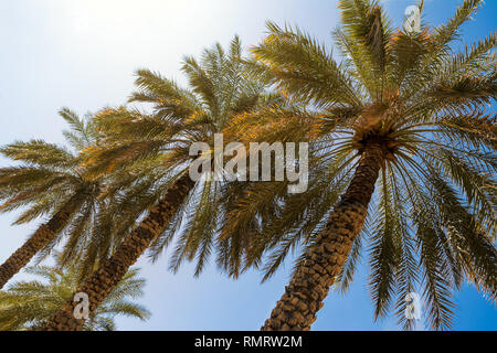 Palms framed from below with the blue sky - Stock Photo