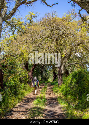 A trekker passing through a cork grove between Cercal do Alentejo and Porto Covo on the Rota Vicentina in southern Portugal. - Stock Photo
