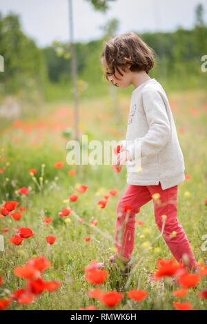 Cute little girl having fun in a poppy field - Stock Photo