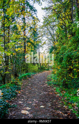 A footpath in autumn forest with fallen leaves, yellowed trees, green ivy and shrubs is a great place for lovers of an active healthy lifestyle for hi - Stock Photo