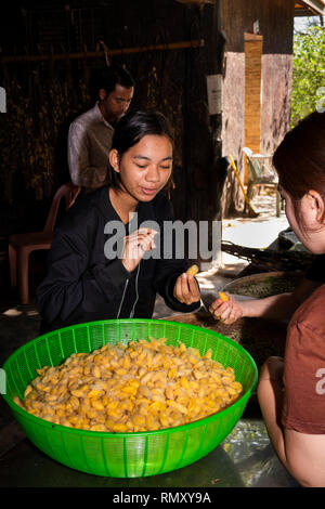 Cambodia, Phnom Penh, Koh Dach, Silk Island traditional weaving centre, guide holding silk worm cocoons - Stock Photo