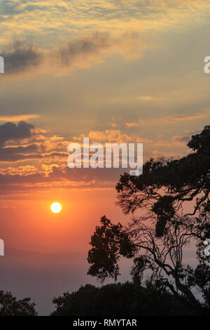 Sunrise over the ngorongoro crater with a tree and clouds, ngorongoro conservation area, Serengeti, Tanzania, Africa - Stock Photo