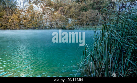 Gras in foggy, misty and turquoise Water within the Plitvice Lakes National Park in Croatia at dawn - Stock Photo