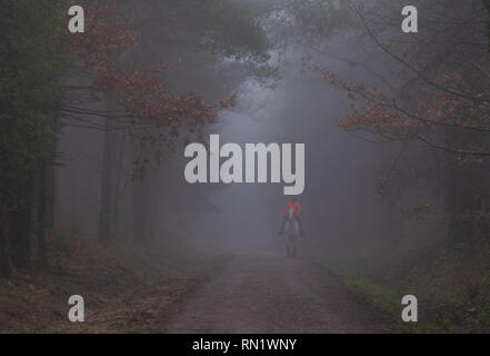Trinity Hill, East Devon, UK. 16th February 2019. UK Weather:  Thick fog envelopes the woodland at East Devon beauty spot, Trinity Hill. A woman in a bright jacket rides along the bridle path in thick fogPQ/Alamy Live News