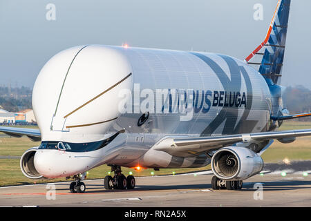 The Airbus Beluga XL at Hawarden Airport in Flintshire, north Wales shortly after landing in the UK for the first time on February 14, 2019 - Stock Photo