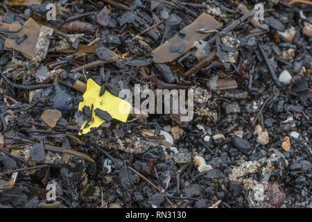 Shard of plastic sea waste washed ashore on beach. Metaphor 'war on plastic', plastic waste, plastic rubbish in the UK. - Stock Photo