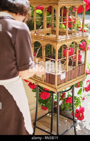 A big, wooden bird cage with a graybird on a natural, blurred background. The bird in captivity. The cage for fowls. - Stock Photo