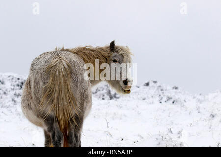 Winter wonderland in Dartmoor National Park - Stock Photo