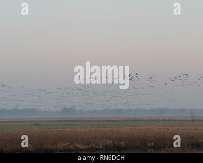 Wildvögel im Morgennebel, Landschaft, Morgengrau - Stock Photo