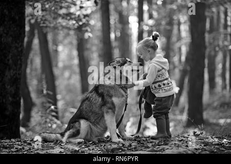 Red riding hood with wolf in fairy tale woods. Little girl with dog in autumn forest. Childhood, game and fun. Child play with husky and teddy bear on - Stock Photo