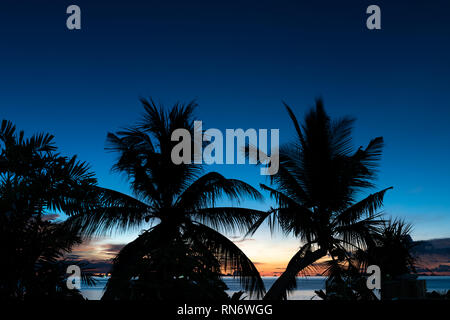 Silhouette coconut palm trees over blue sea sky background at dusk - Stock Photo